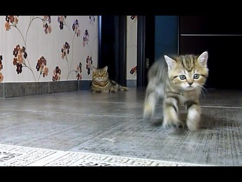Formula Kittens! | The Animal Rescue Site Blog  Watch the kittens and their formidable need for speed (and, if time, the Dalmatian and the kittens), then CLICK to provide food & care for those still in shelters.
