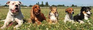 Hypoallergenic Dog Breed Information