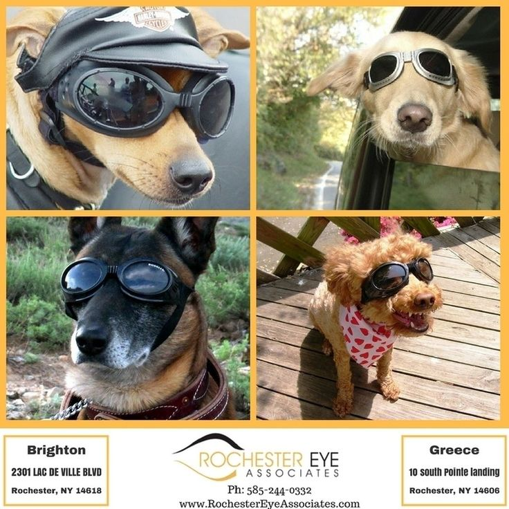 July is #Eye Injury Prevention Month!  Did you know over 90% of eye injuries are preventable with the use of safety eye wear? Our #optical shops carry #prescription safety glasses stop in for your pair today!#RochesterEyeAssociates #RochesterEyeWear #BrightonNY #GreeceNY #RochesterNY