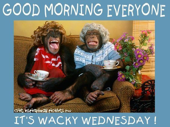 Good Morning Everyone Its Wacky Wednesday
