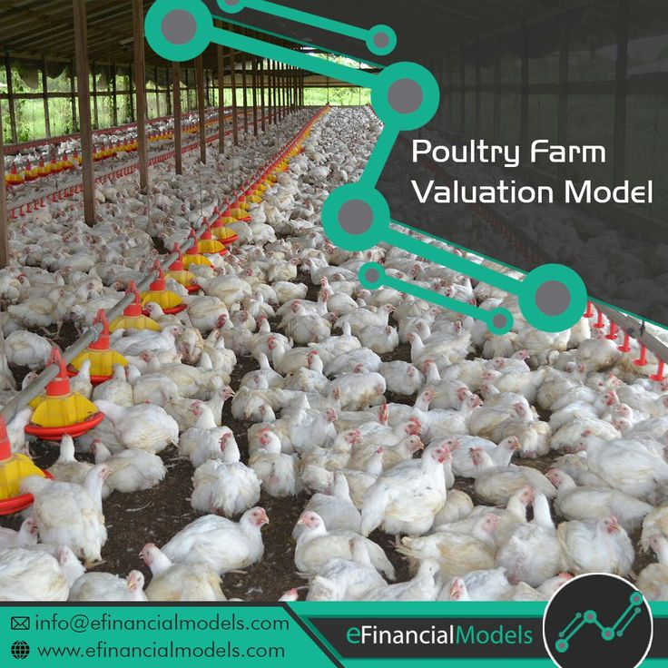 Agriculture Financial Model Templates Bundle Poultry