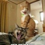 two funny crazy cats