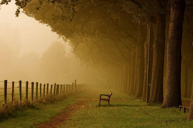 Leendert Buteijn photos nature autumn silence fog