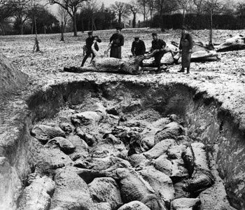 Dead war horses are buried in a mass grave. The Western Front (1916) .