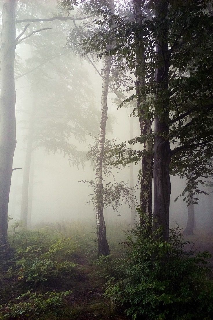 Misty forest  #Misty #forest #nature