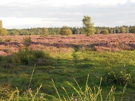 Heide bij Ermelo