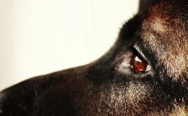 I cani mostrano empatia per le persone che piangono  4 luglio 2012