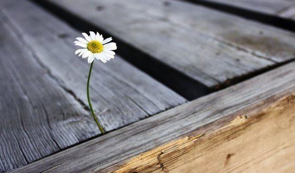 Неудача — это просто возможность начать снова, но уже более мудро.