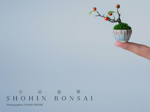 I wonder if such tiny bonsai do in fact fruit and flower proportionately