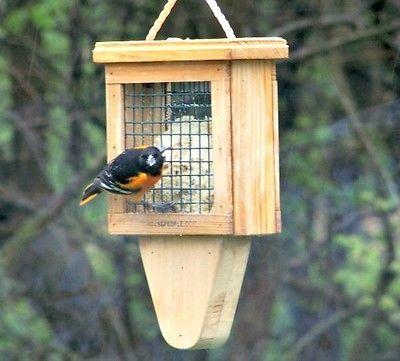 Best 25 Woodpecker feeder ideas on Pinterest