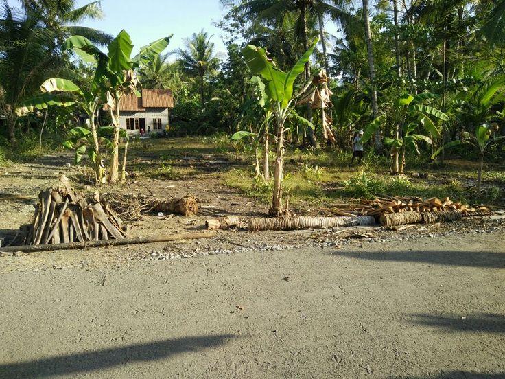 Tanah Murah Dijual Cepat Kulonprogo Yogyakarta Sudah Pekarangan 1