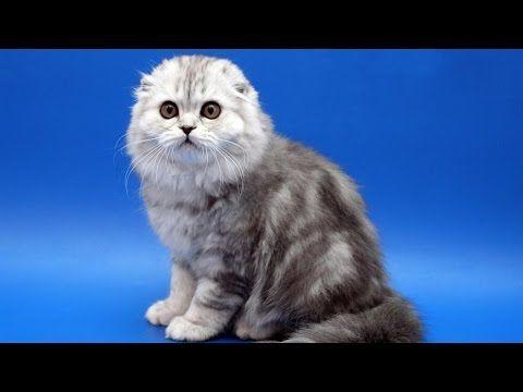 "Cat saying ""OH NO NO NO.._Говорящий кот Тихон против Бэтмена - YouTube cats"