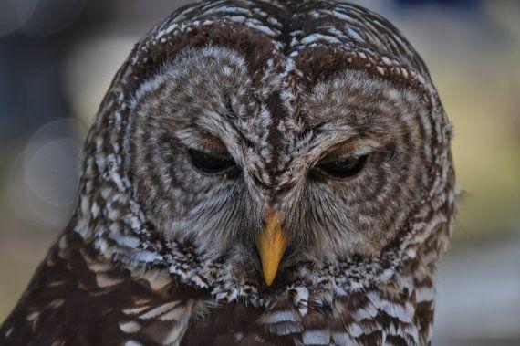 Owl by photosbytyler on Etsy