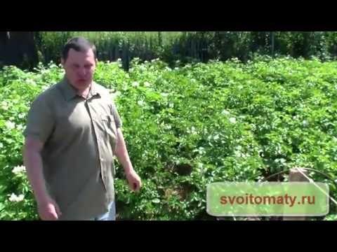 Материалы для мульчирования почвы - YouTube