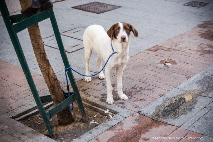 Dog Waiting, barrio de las letras, Madrid.