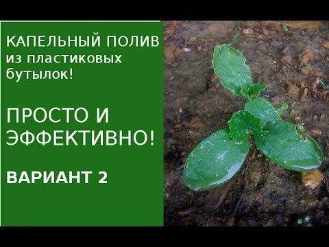 Капельный полив из пластиковых бутылок ч. 2