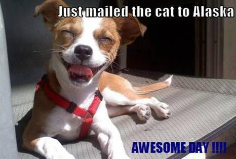 Just mailed the cat to Alaska.Happy Thoughts, Happy Face, Dogs Cat, Smile Dogs, Funny Dogs Pictures, Happy Dogs, Dogs Funny, Happy Puppies, Animal