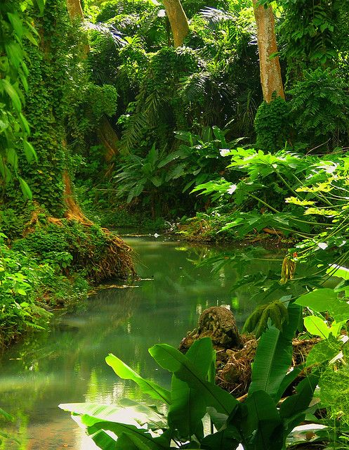 Selva Lacandona, tropical rainforest of Mexico, What is more peaceful to the soul than the sound of a trickling brook? I can imagine it, just looking at this beautiful photo.
