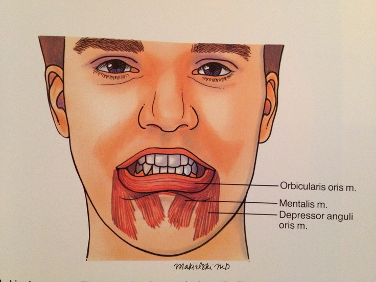 Lip Depressors