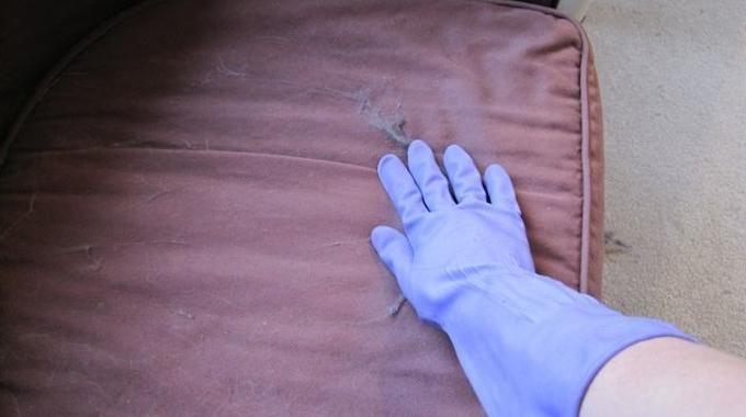 Fini les Poils de Chats Sur le Canapé Grâce à Cette Astuce: Vous n'avez qu'à mettre un gant de vaisselle tout ce qu'il y a de plus banal, et à passer votre main gantée sur la surface que vous voulez nettoyer.