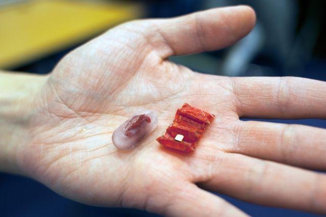 GENIO Italiano Giuseppe Cotellessa: Tiny origami robot unfolds in stomach / Un piccolo...