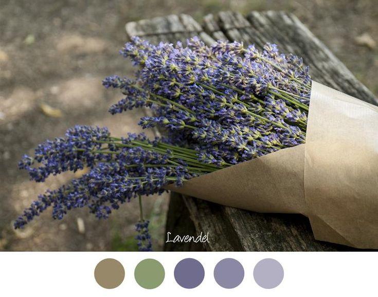 Bekijk de foto van MrsHooked - Kleurinspiratie met als titel LAVENDEL - Mooie tinten paars / lila en vaal groen. Bosje lavendel in bruin papier op een oud bankje. en andere inspirerende plaatjes op Welke.nl.