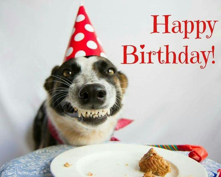 joyeux anniversaire chien drole