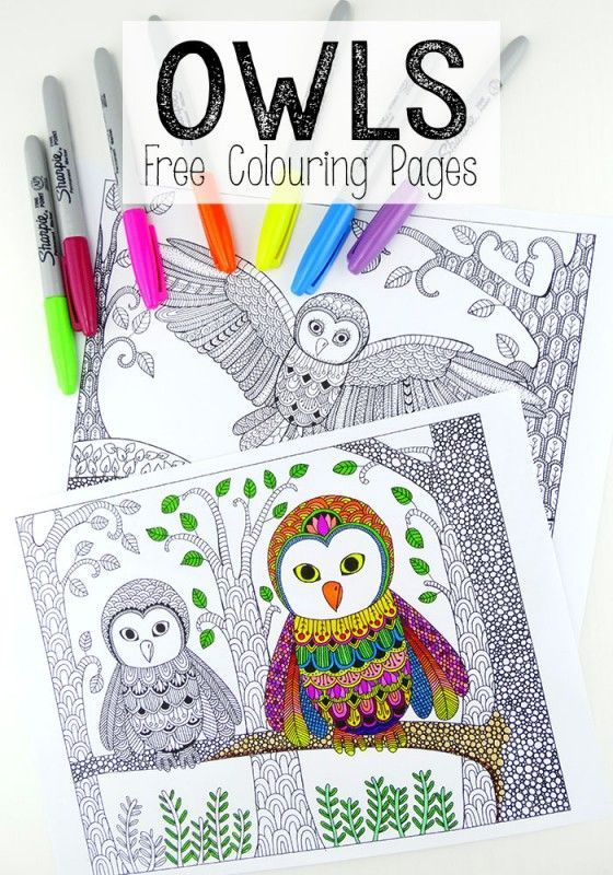 more free colouring pages for grown ups these owl colouring pages are simply stunning and