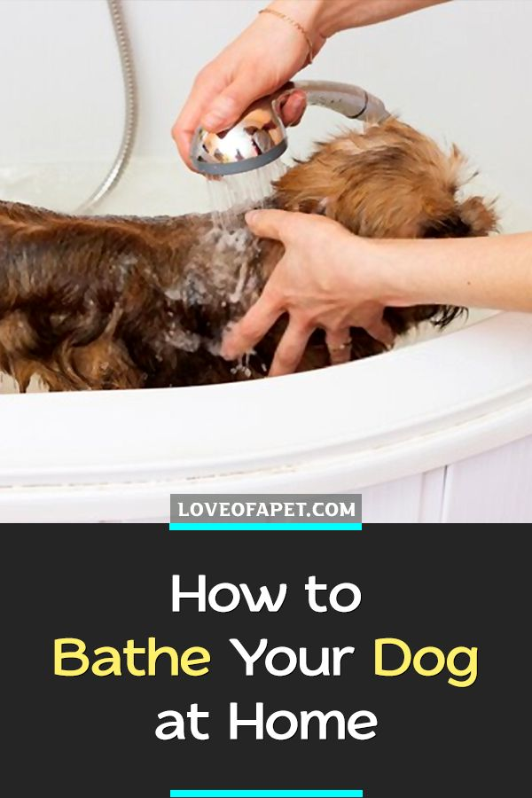 Pin On Dog Cleaning And Grooming