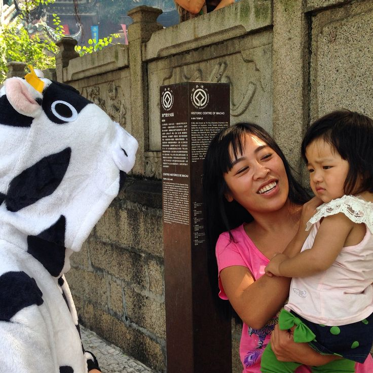 Cow in Macau loves meeting the locals who are all very friendly and not fazed by a cow wandering down the street.