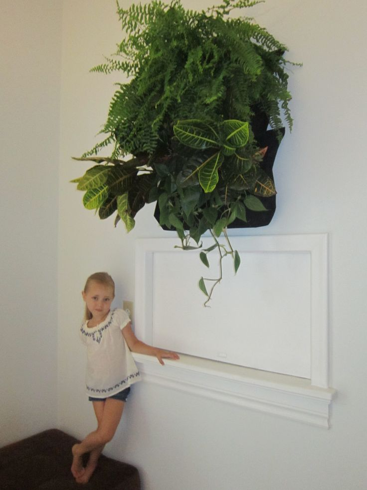 "One of my favorite things in my house is my ""Wally"" living wall planter in my dining room by a company called Woolly Pocket. It is my dream to cover an entire wall in my home in plants!"