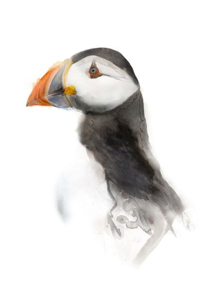 Puffin - A mixed media artwork by Manchester based wildlife and pet portrait artist Ben Ark. Created using a variety of materials including acrylic paint, computer software, drawing pens, ink, watercolour and graphite. #Puffin #Animal #Art