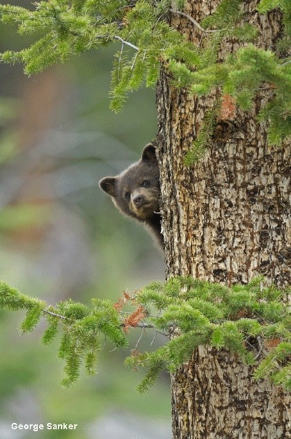 Today for National #WildlifeWeek we're exploring wildlife often found on or in the TRUNK of a tree! http://www.nwf.org/National-Wildlife-Week/Wildlife.aspx#trunk