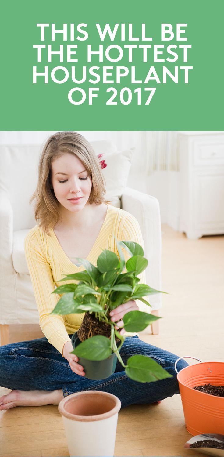 best jars terrariums images on pinterest terrariums gardening