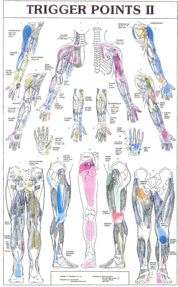 Trigger Points II, yep we like trigger points so well at F.I.R.S.T. we have both posters to help educate our clients!