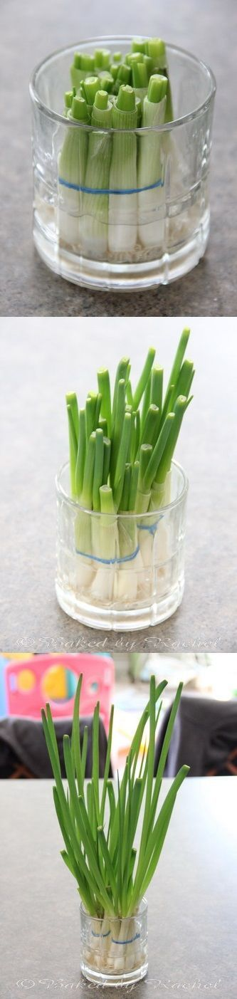 Next time you buy green onions, save the bulb and toss it in a jar of water...you'll have a whole new bunch in 12 days!