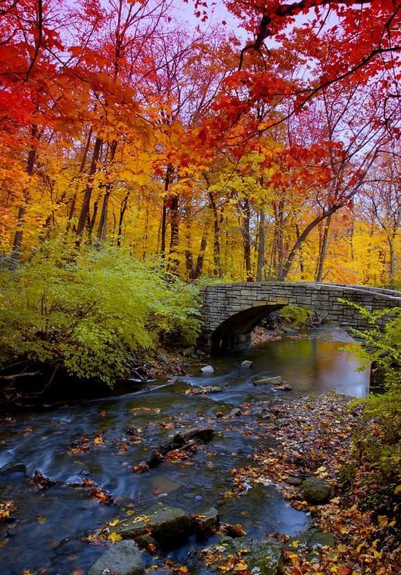 Autumn Bridge, Chicago, Illinois. but it reminds me of Wissahickon (sp?) Creek from my childhood.  Our family used to go and walk there every fall.  I would run into large piles of leaves and kick them everywhere.  Fall was so beautiful and the memories of a place much like this likes buried deep within me.