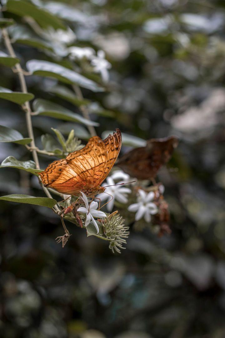 Kuala Lumpur, Malaysia, Travelblogger, Asia roundtrip, Travelblogger, Butterfly park, beautiful, butterfly, Schmetterling