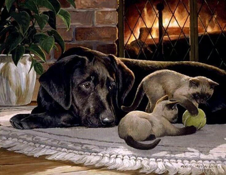 cane osserva gattini che giocano