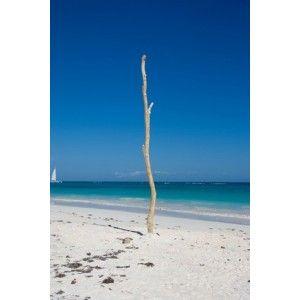 Branches de bois flotté  http://www.les-bois-flotte.com/