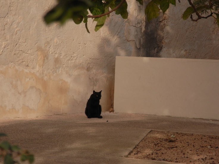 saraccino: Inspirations: Critters and the fortified church (Formentera)