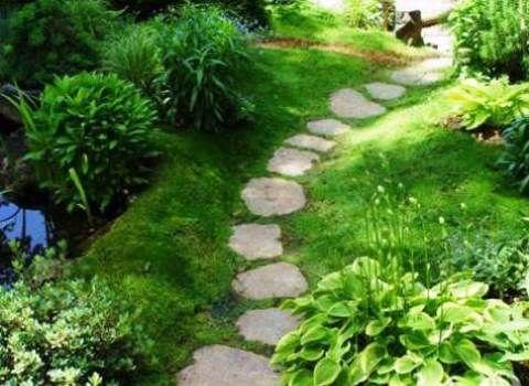 декоративный мох в саду фото