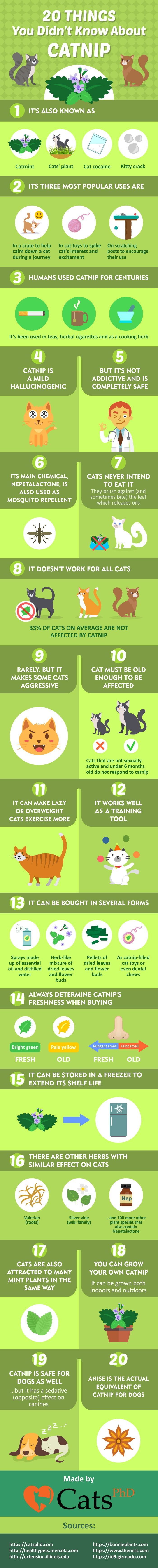 Is Catnip Safe for my Cat: 20 Things You Didn't Know About Catnip