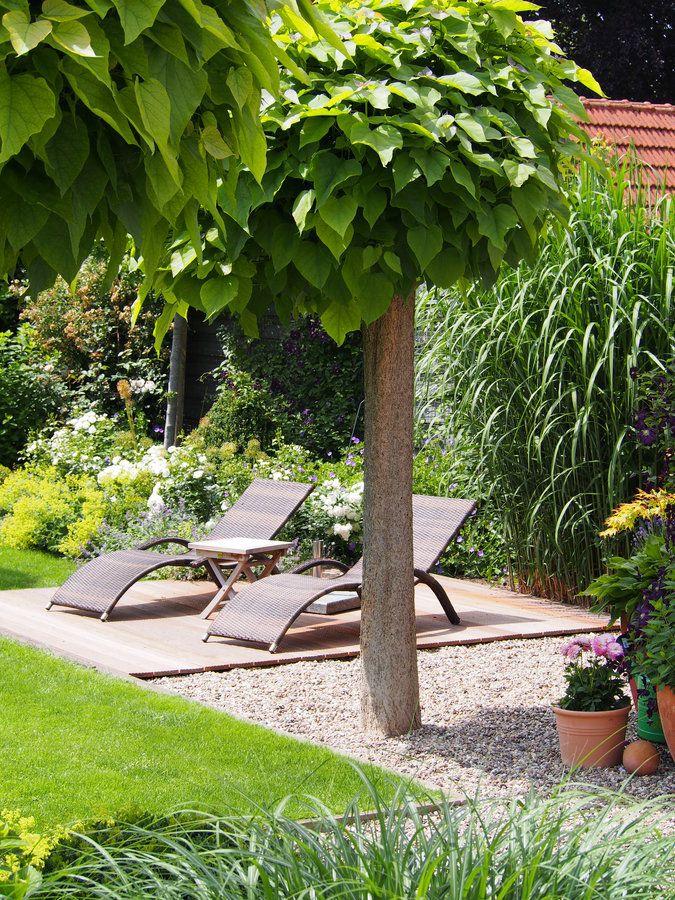 Trompetenbäume, Schatten, Sichtschutz, Holzdeck