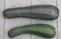 Ricetta parmigiana bianca di zucchine | Ricette di ButtaLaPasta