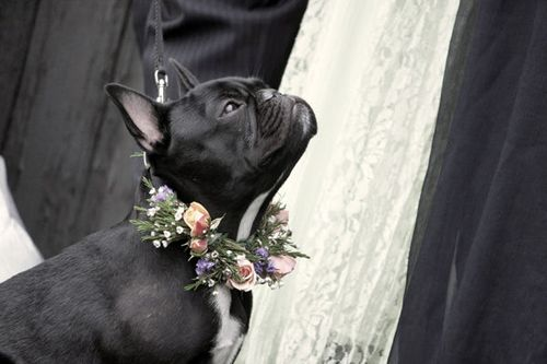 hond-zwart
