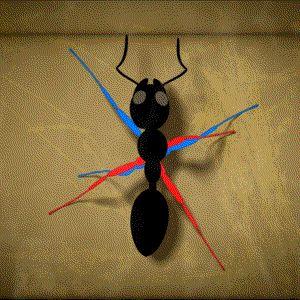 How ants walk