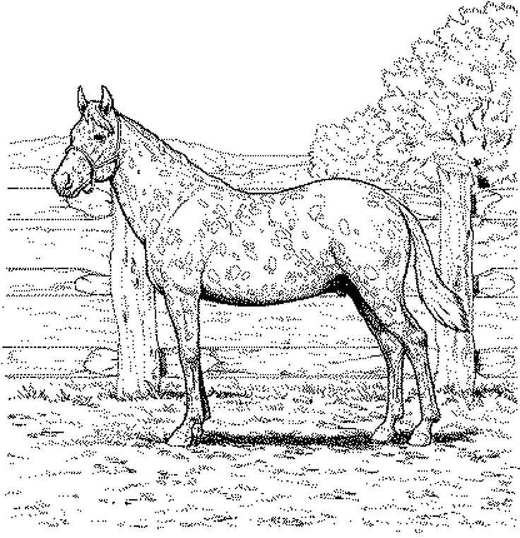 Coloring Pictures Of Horses Adult horses to print and color
