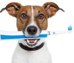 Nettoyer naturellement les dents de mon chien