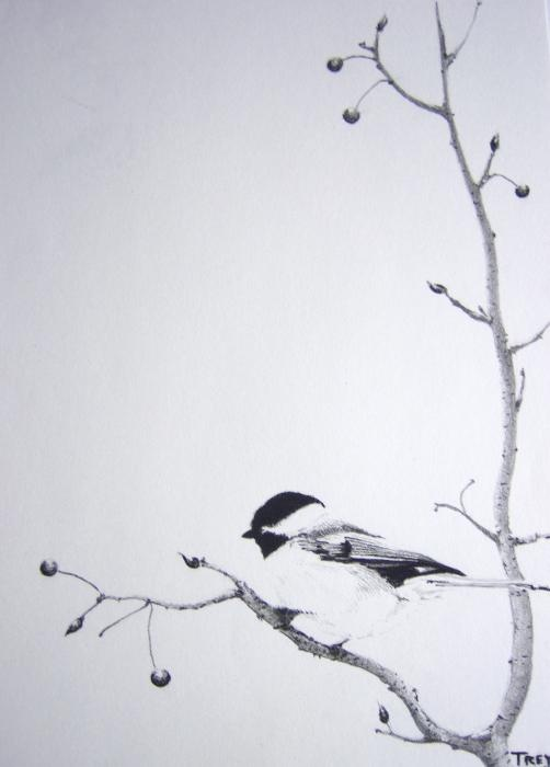I love chickadees. Their little monochromatic cloaks, their piquant calls, their sassiness...Love them.